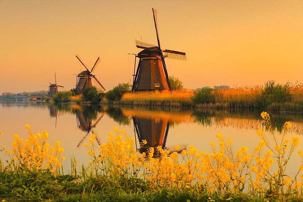 Windmills at sunrise, Kinderdijk, UNESCO World Heritage Site, South Holland, Netherlands, Europe