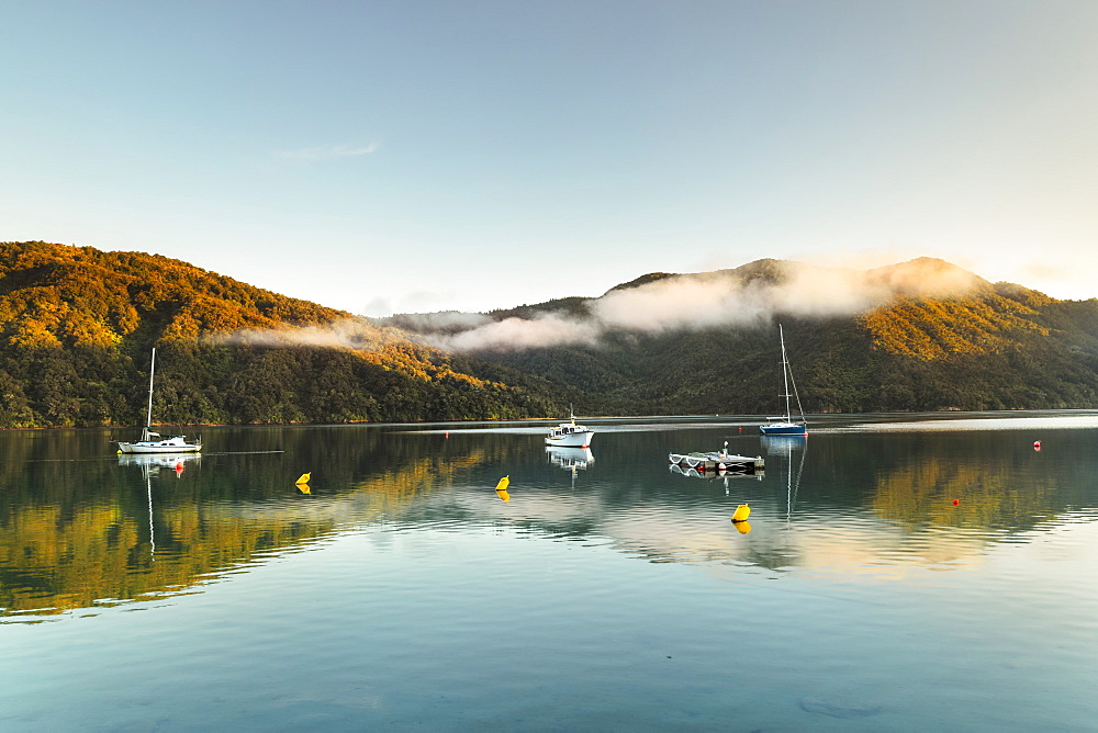 Queen Charlotte Sound and Momorangi Bay at sunrise, Marlborough Sounds, Picton, South Island, New Zealand, Pacific - 1160-4481