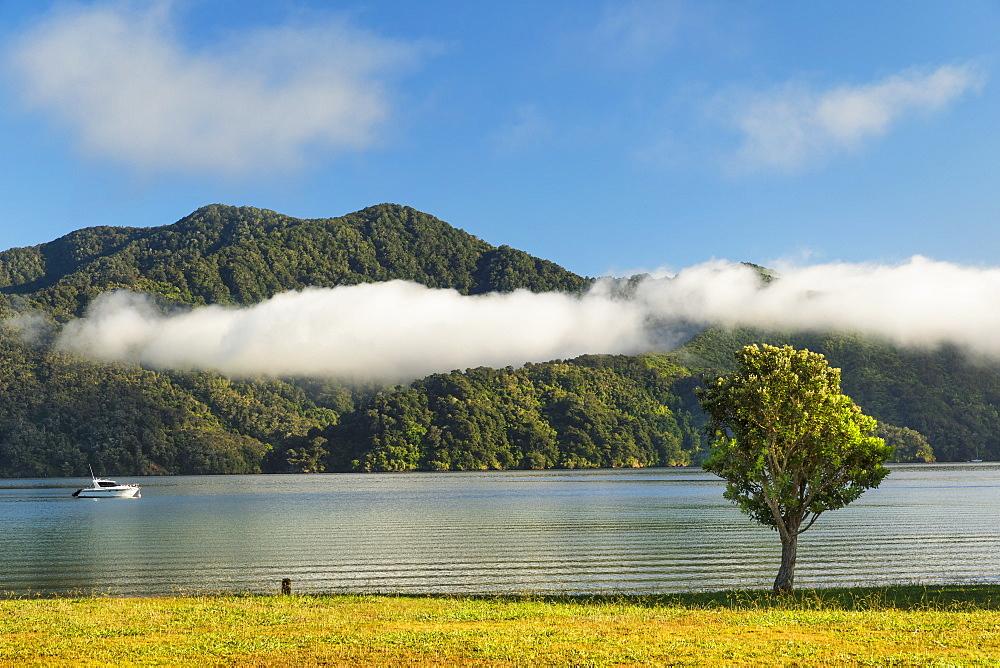 Ngakuta Bay, Marlborough Sounds, Picton, South Island, New Zealand, Pacific - 1160-4483