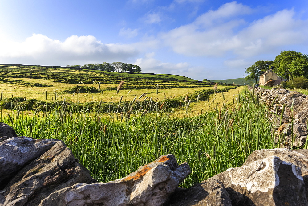 Newly mown grass in field with dry stone walls, copse of trees and house, spring morning sun, Peak District, Derbyshire, England, United Kingdom, Europe