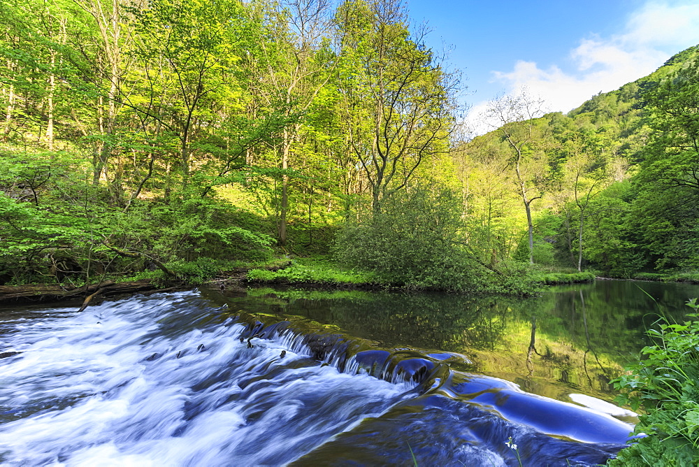 River Wye with weir runs through verdant wood in Millers Dale, reflections in calm water, Peak District, Derbyshire, England, United Kingdom, Europe