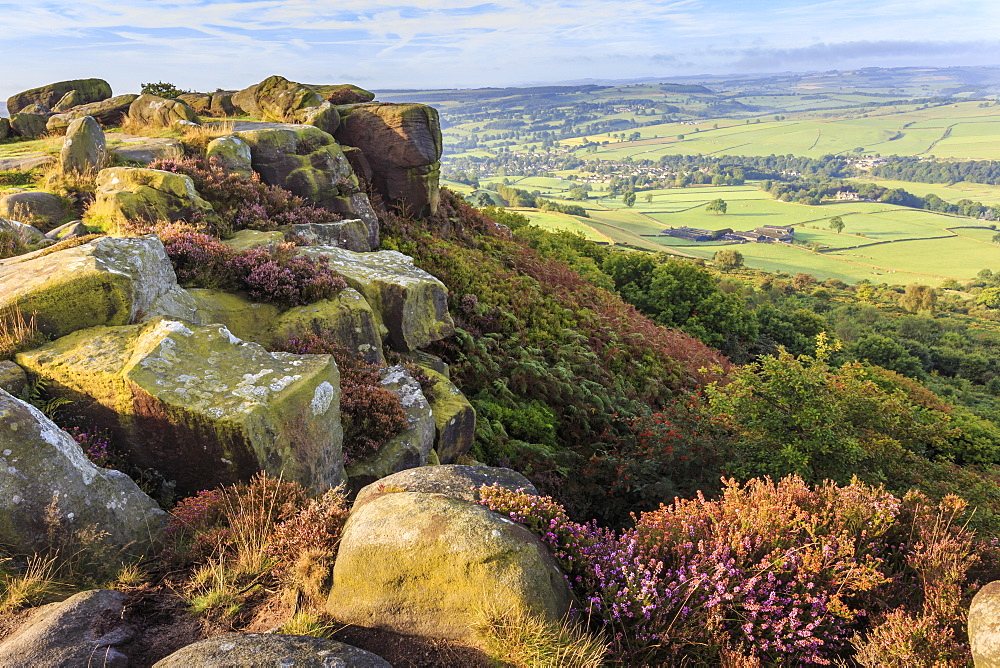 Baslow Edge, early autumn heather, view to Baslow village, Peak District National Park, Derbyshire, England, United Kingdom, Europe