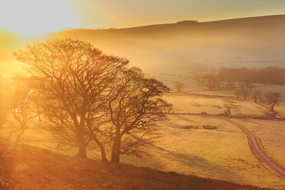 Misty and frosty sunrise with a copse of trees in winter, Castleton, Peak District National Park, Hope Valley, Derbyshire, England, United Kingdom, Europe