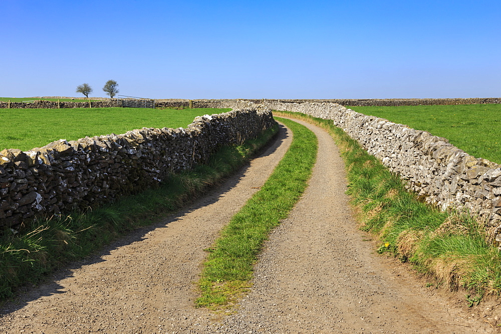 Track disappears into distance, grass, two trees and dry stone walls, typical country scene, Peak District, Derbyshire, England