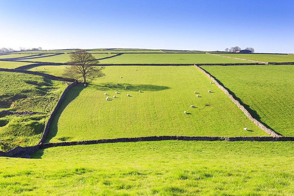 Sweeping landscape featuring dry stone walls, Spring, Peak District National Park, near Litton, Derbyshire, England