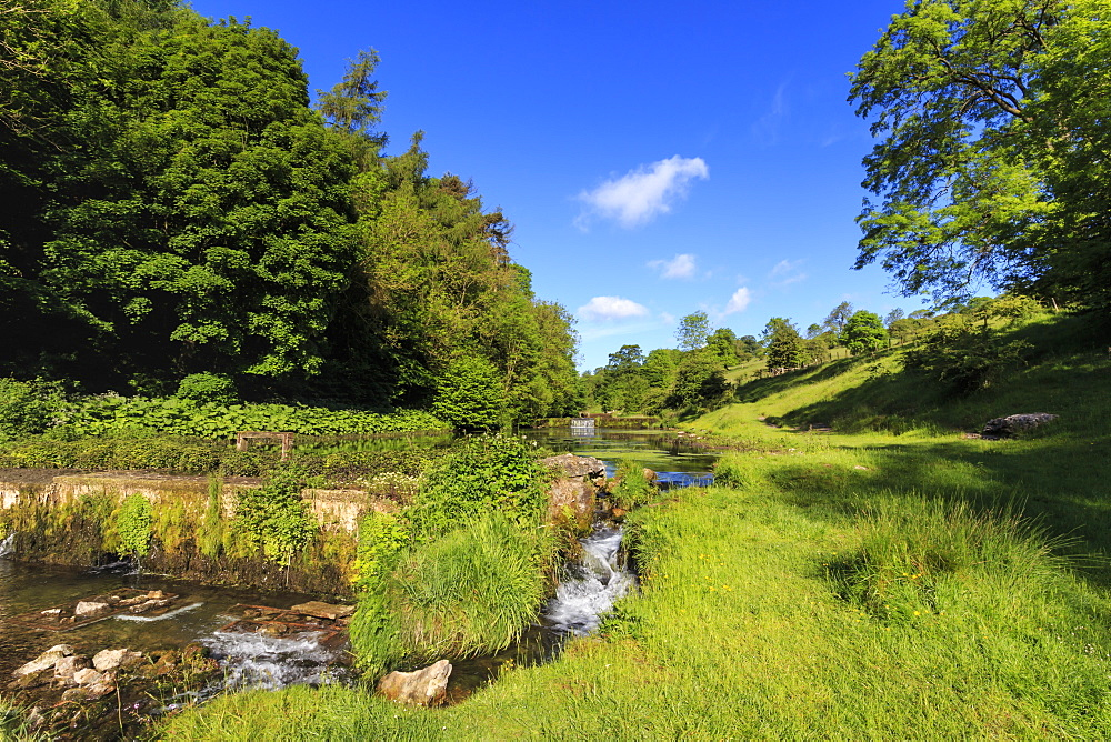 Lathkill Dale, near Over Haddon and Youlgreave (Youlgrave), spring, Peak District National Park, Derbyshire, England, United Kingdom, Europe