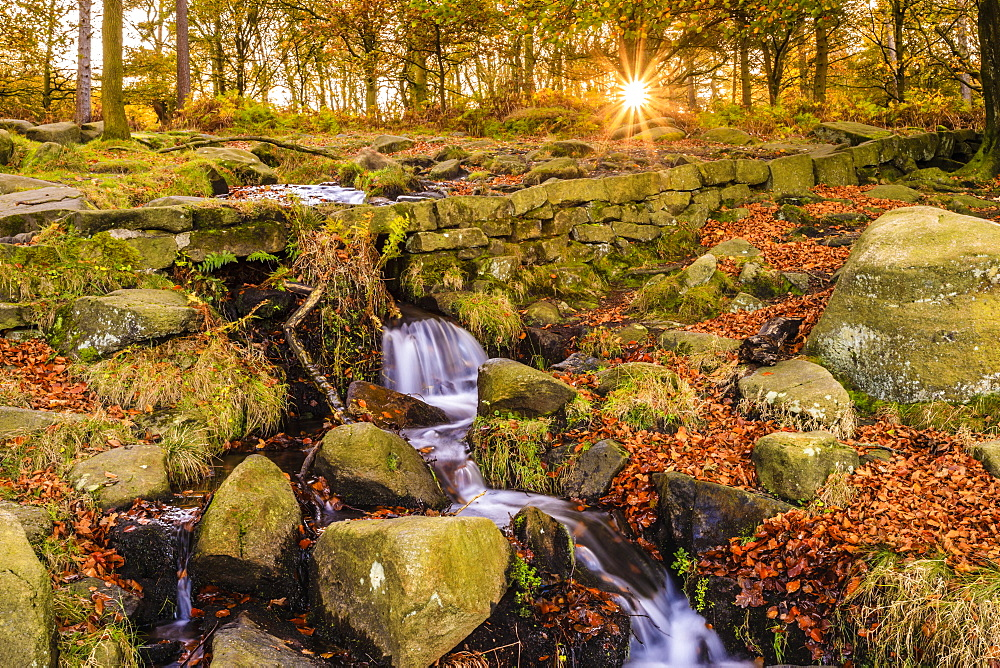 Burbage Brook, autumn sunrise, golden leaves and waterfall, Padley Gorge, Peak District National Park, Derbyshire, England, United Kingdom, Europe