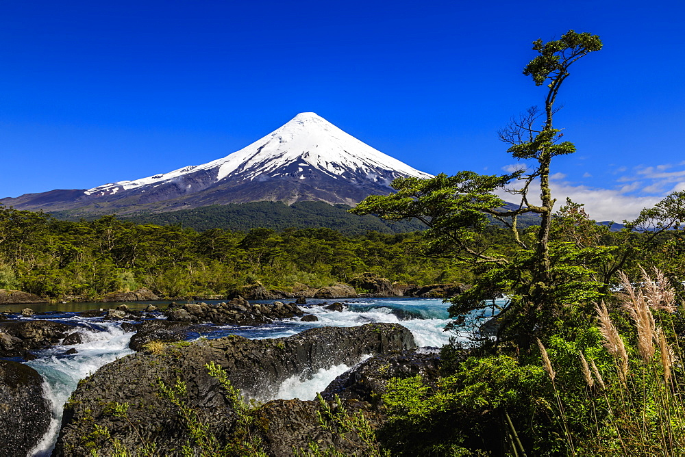 Petrohue rapids, snow-capped, conical Osorno volcano, Vicente Perez Rosales National Park, Spring, Lakes District, Chile, South America - 1167-1884