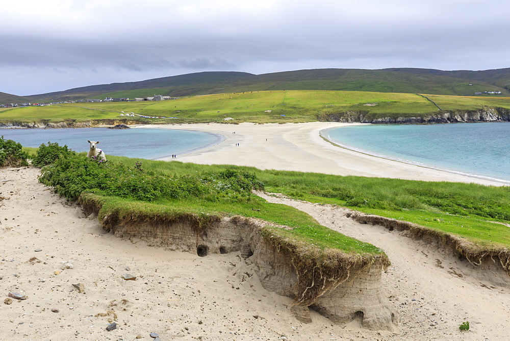 View to Bigton, St. Ninian's Isle, white beach tombolo, Mainland, Shetland Islands, Scotland, United Kingdom, Europe