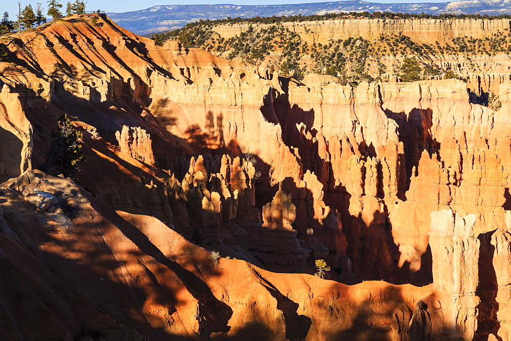 Hoodoos and lone pine tree on a ridge lit by late afternoon sun, view to Sunrise Point, Bryce Canyon National Park, Utah, United States of America, North America