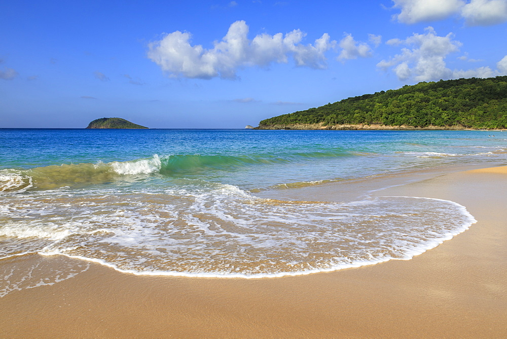 Tropical Anse de la Perle beach, golden sand, turquoise blue sea, Death In Paradise location, Deshaies, Guadeloupe, Leeward Islands, West Indies, Caribbean, Central America