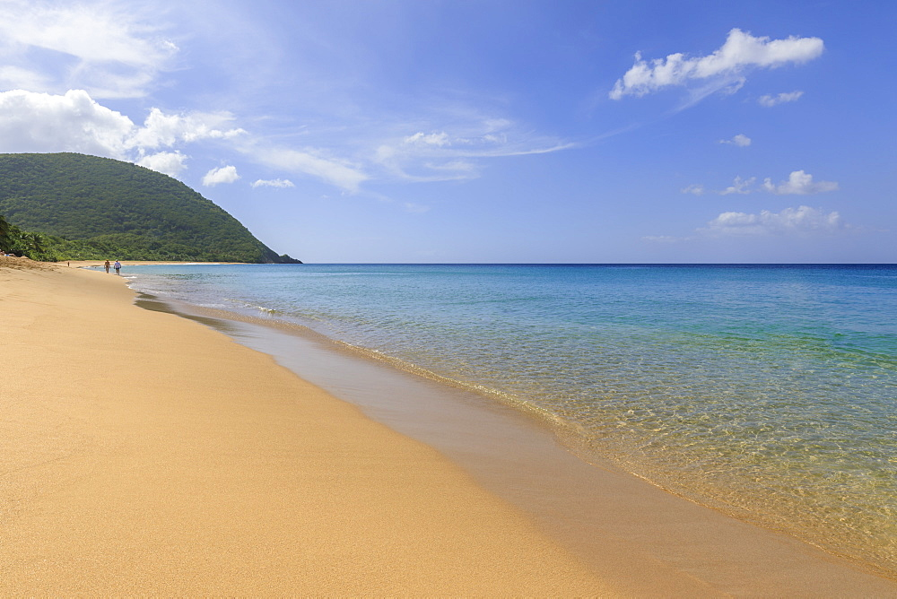 Tropical Grande Anse beach, palm trees, blue sea, golden sand, Deshaies, Basse Terre, Guadeloupe, Lesser Antilles, Caribbean