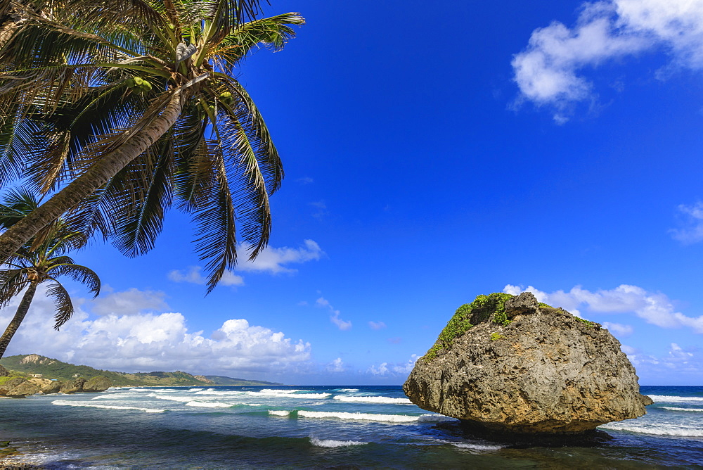 Bathsheba, Mushroom rock, windswept palm tree, Atlantic waves, rugged East Coast, Barbados, Windward Islands, West Indies, Caribbean, Central America