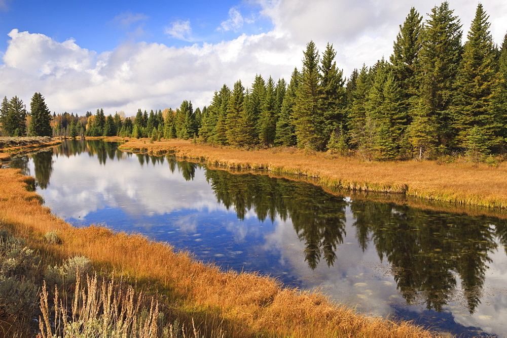 Reflected pines at Schwabacher's Landing, Grand Teton National Park, Wyoming, United States of America, North America