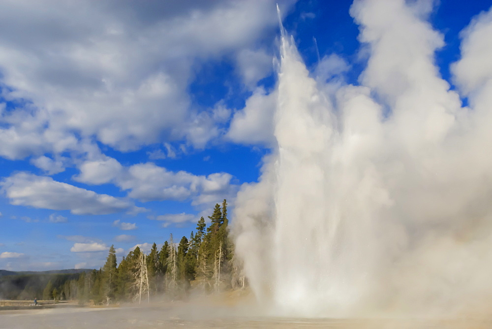 Lone observer watches Grand Geyser erupt, Upper Geyser Basin, Yellowstone National Park, UNESCO World Heritage Site, Wyoming, United States of America, North America