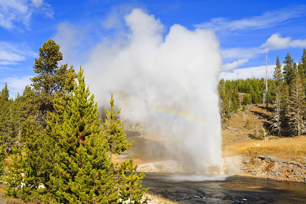 Eruption of Riverside Geyser, Firehole River, Upper Geyser Basin, Yellowstone National Park, UNESCO World Heritage Site, Wyoming, United States of America, North America