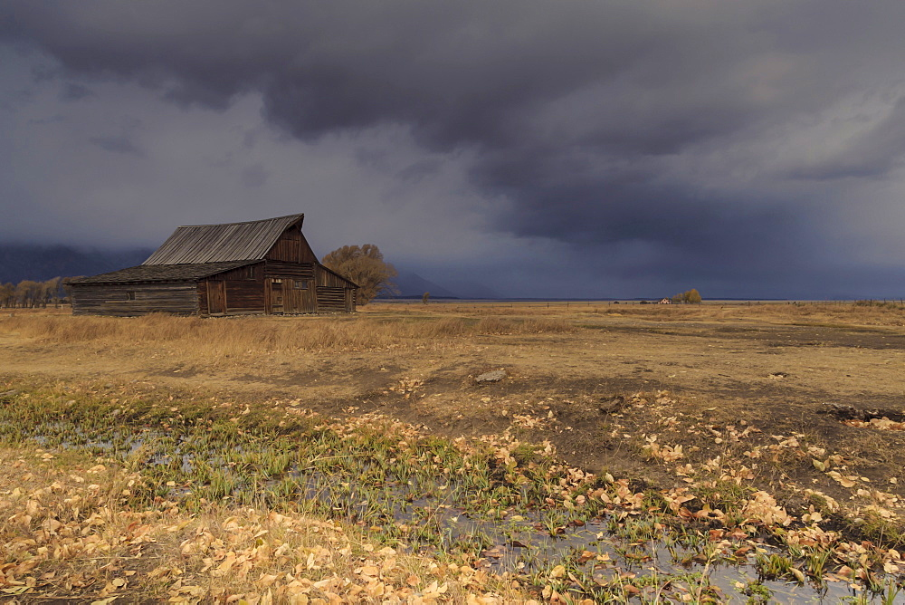 Storm approaches, autumn (fall) leaves and drainage ditch with Mormon Row barn, Grand Teton National Park, Wyoming, United States of America, North America