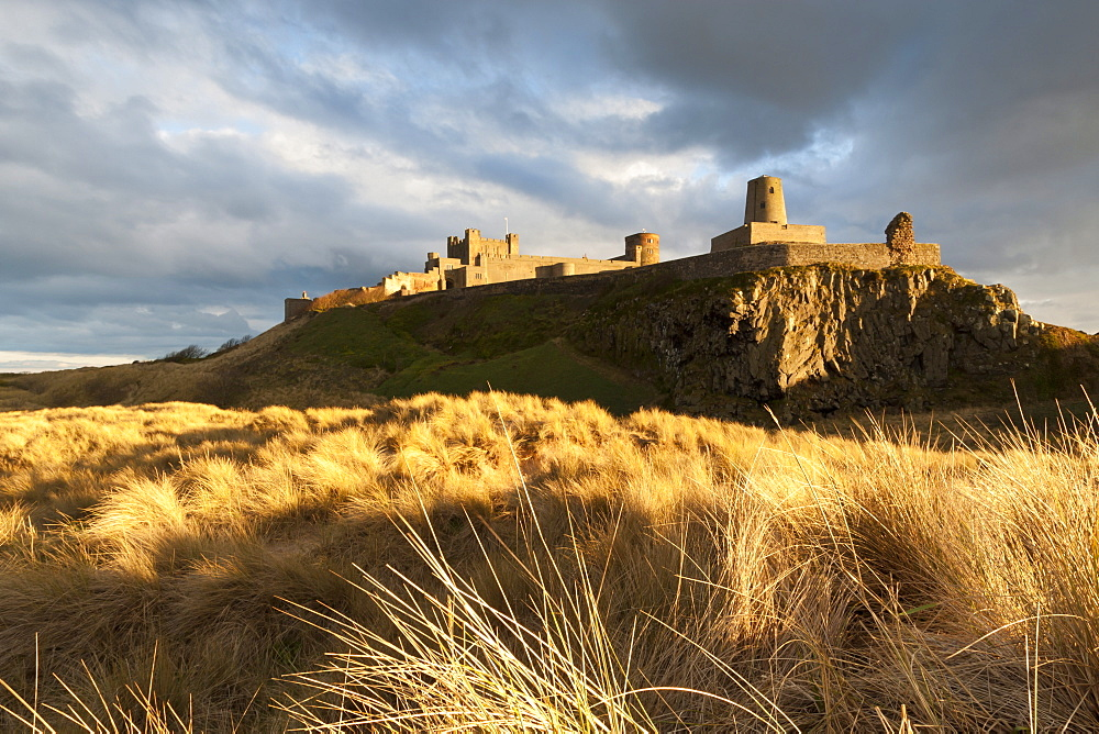 Bamburgh Castle and dune marram grass bathed in golden evening light, Bamburgh, Northumberland, England, United Kingdom, Europe