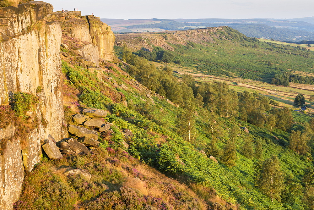 Gritstone, heather, ferns and trees on a summer evening, Curbar Edge, Peak District National Park, Derbyshire, England, United Kingdom, Europe