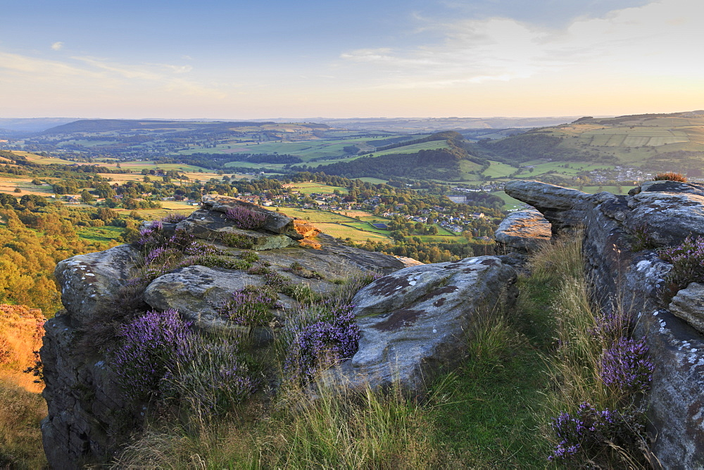 Purple heather on Curbar Edge, above Curbar and Calver villages in summer, Peak District National Park, Derbyshire, England, United Kingdom, Europe