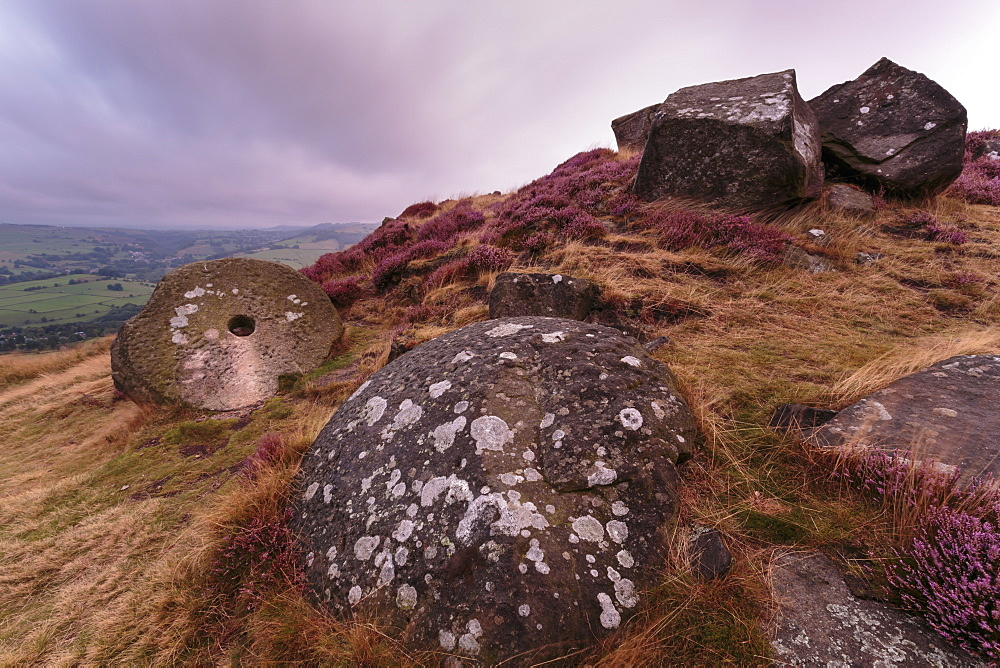Millstone amongst heather and lichen covered boulders at dawn, Curbar Edge, late summer, Peak District, Derbyshire, England, United Kingdom, Europe