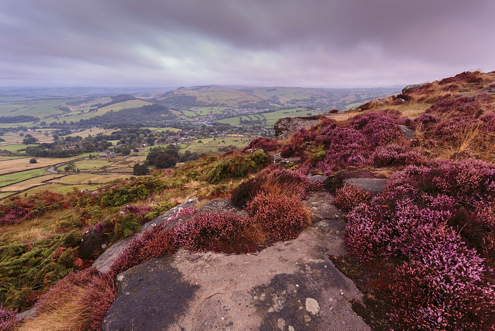 Heather on Curbar Edge at dawn with Curbar and distant Calver villages, late summer, Peak District, Derbyshire, England, Europe