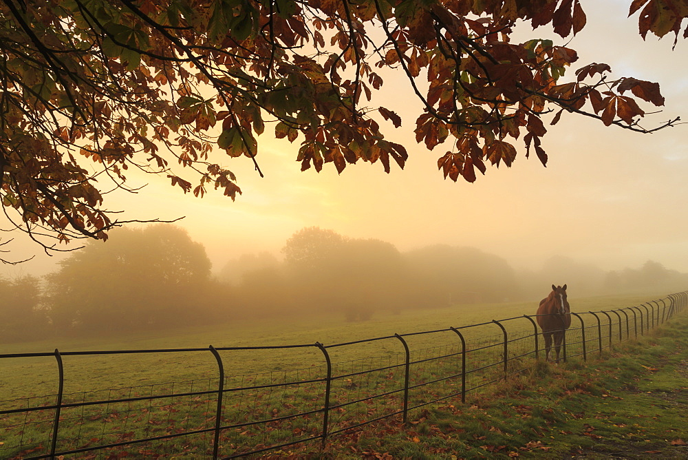 Distant horse in a field at sunrise on a foggy morning in autumn, High Tor, Matlock, Derbyshire Dales, Derbyshire, England, United Kingdom, Europe