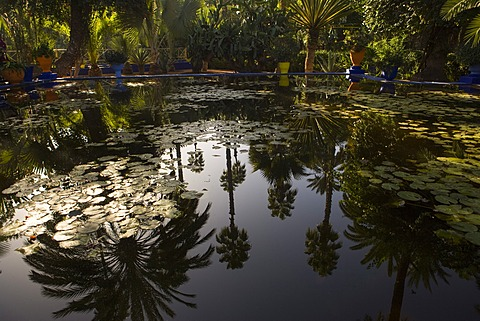 Reflections in lily pool, Jardin Majorelle, owned by Yves St. Laurent, Marrakech, Morocco, North Africa, Africa