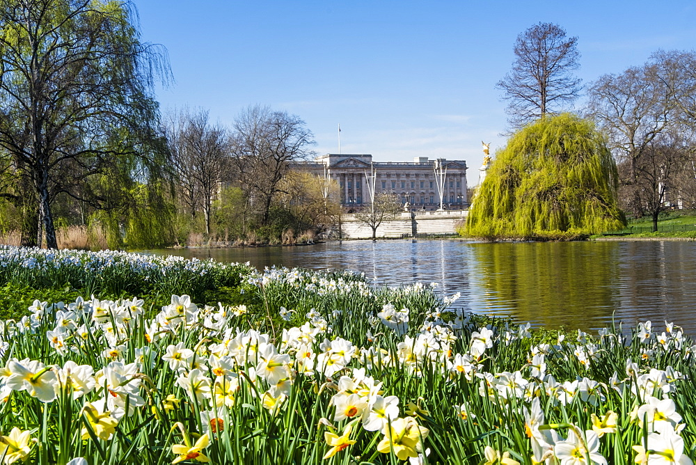 View of Buckingham Palace in springtime from St. James's Park, London, England, United Kingdom, Europe - 1176-1216