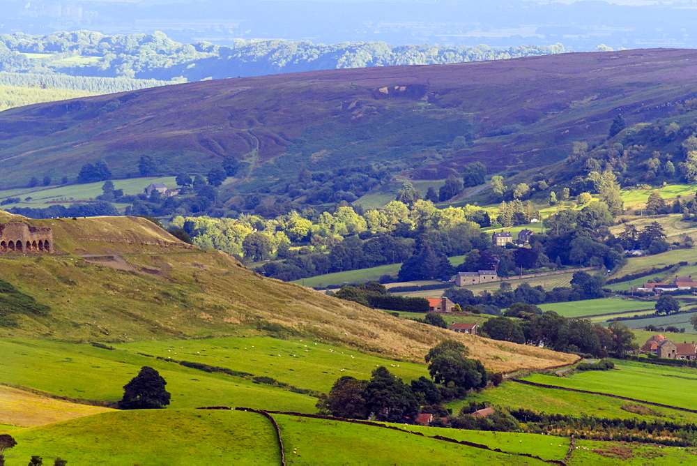Heathland in bloom, and rolling hills, Yorkshire Moors National Park, Yorkshire, England, United Kingdom, Europe - 1176-810