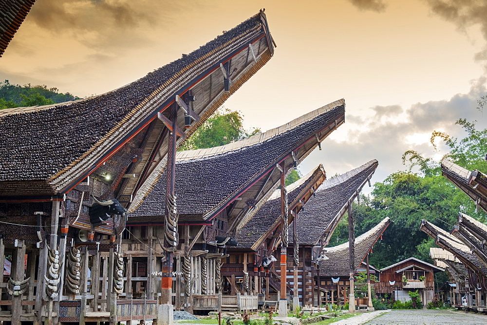 A rice farming village with traditional Torajan Tongkonan long houses, Tana Toraja, Sulawesi, Indonesia, Southeast Asia, Asia