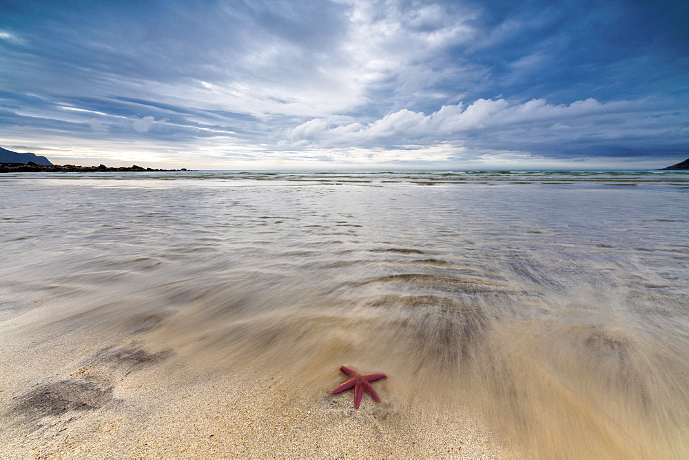 Sea star in the clear water of the fine sandy beach, Skagsanden,  Ramberg, Nordland county, Lofoten Islands, Arctic, Northern Norway, Scandinavia, Europe
