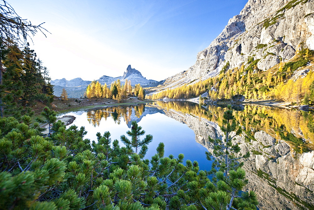 The peak of the Becco di Mezzodi, in the Dolomites, reflecting in the Federa lake, surrounded by yellow larches, Trentino-Alto Adige, Italy, Europe - 1179-130