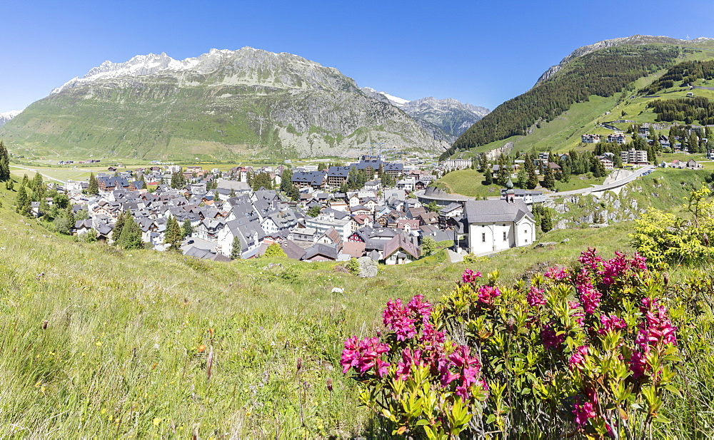 Rhododendrons frame the alpine village of Andermatt, surrounded by woods, Canton of Uri, Switzerland, Europe