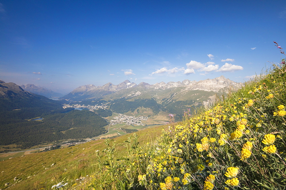 Green meadows and flowers frame the high peaks Muottas Muragl Samedan Canton of Graubünden Engadine Switzerland Europe