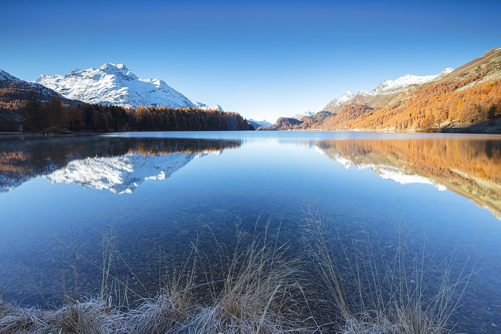 The snowy peaks and colorful woods are reflected in Lake Champfèr St.Moritz Canton of Graubünden Engadine Switzerland Europe