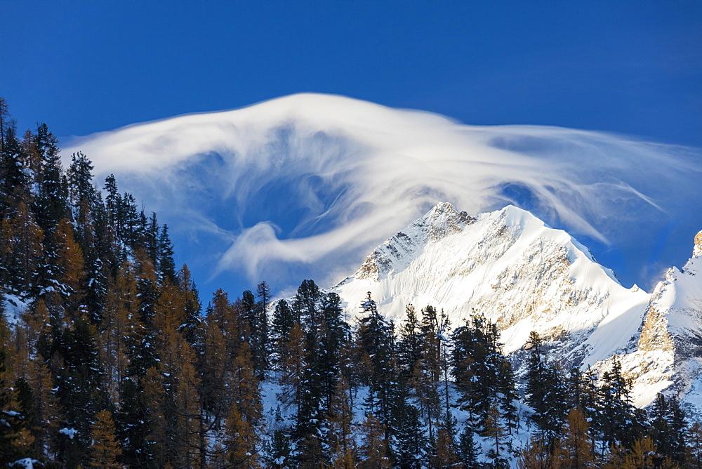 White cloud at dawn lights up Piz Bernina and Biancograt framed by woods Engadine Canton of Graubünden Switzerland Europe