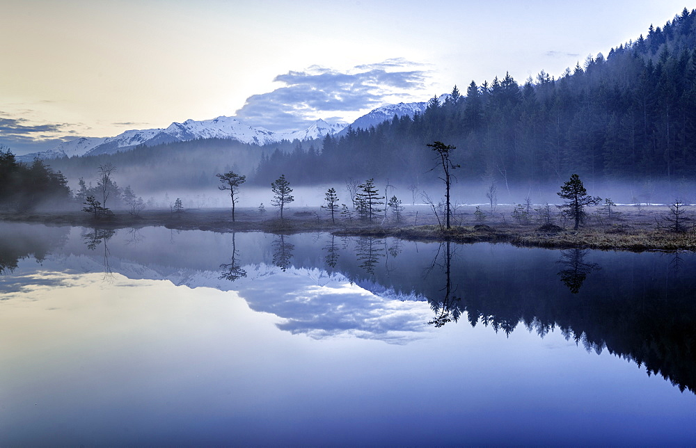 Fog hiding the vegetation in the Nature Reserve of Pian di Gembro before sunrise, Lombardy, Italy, Europe