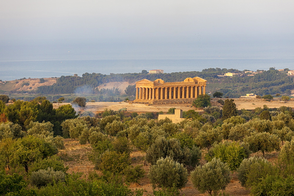 The olive grove frames the Temple of Concordia an ancient Greek temple in the Valle dei Templi Agrigento Sicily Italy Europe
