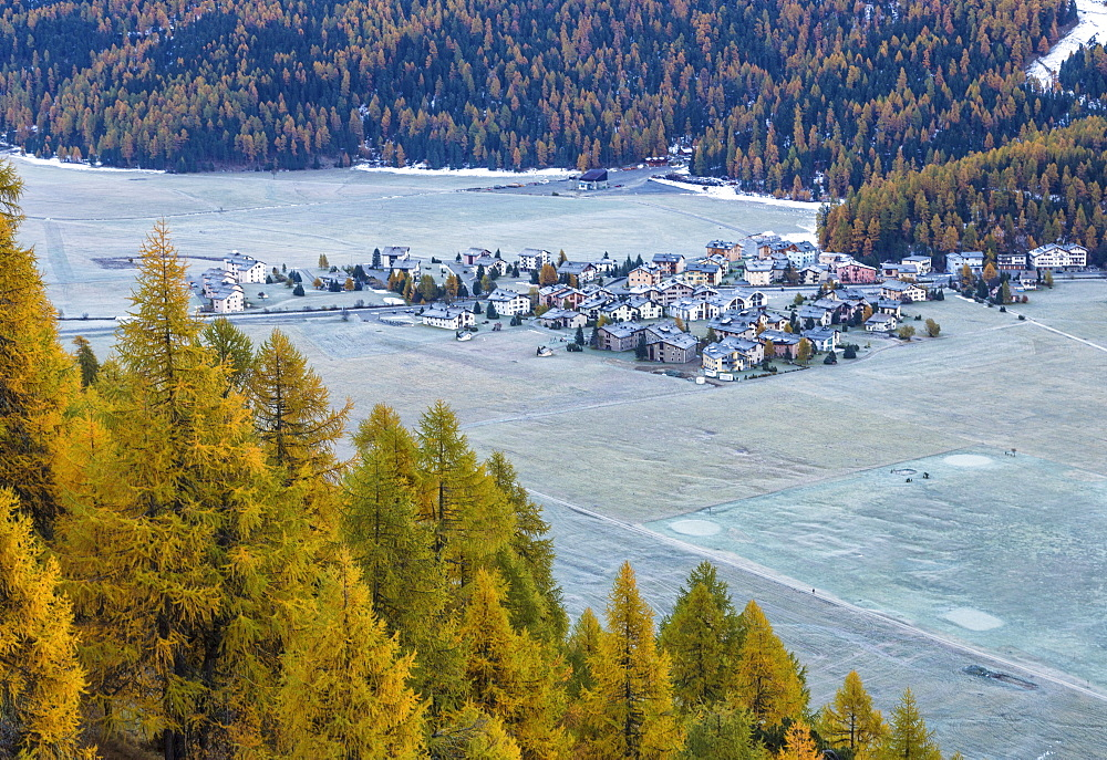 Frost whitening the meadows and the village of Surlej by St. Moritz in Engadine, surrounded by yellow larches in autumn, Graubunden, Swiss Alps, Switzerland, Europe