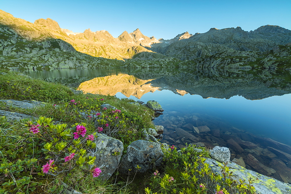 Rhododendrons frame the blue water of Lago Nero at dawn, Cornisello Pinzolo, Brenta Dolomites, Trentino-Alto Adige, Italy, Europe