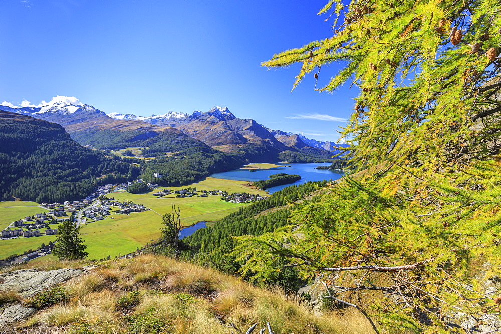 In summer the Engadine valley becomes a paradise for mountain lovers with larch forests, pristine lakes and elegant peaks, Graubunden, Switzerland, Europe