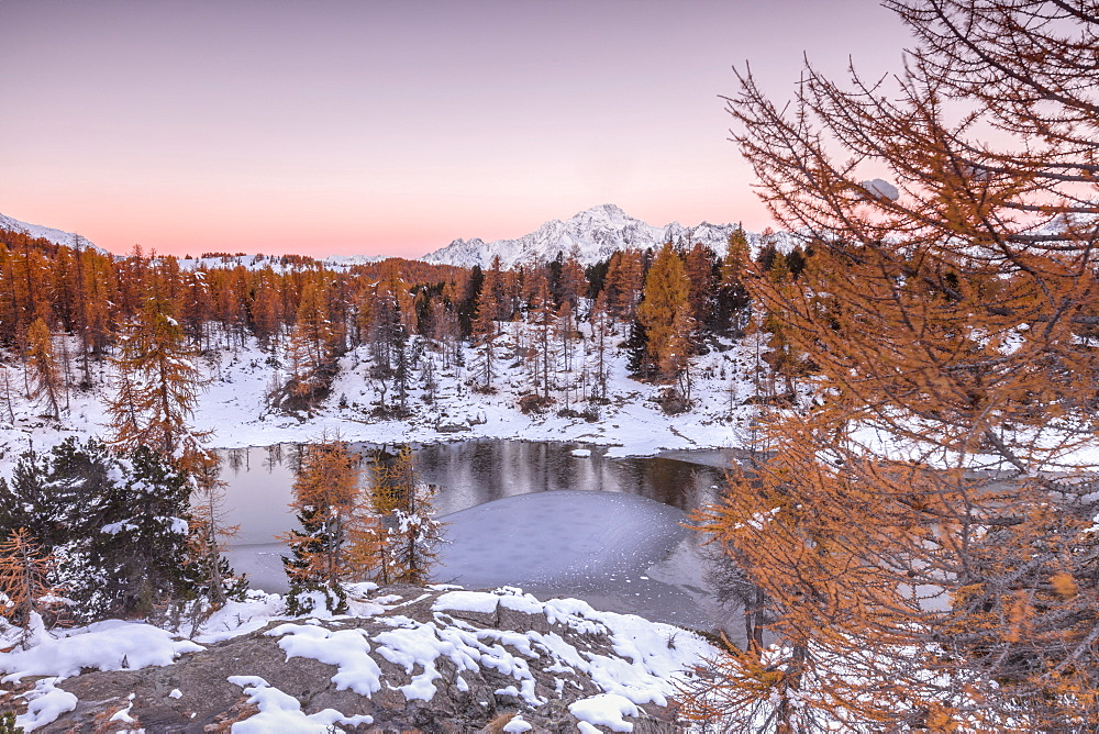 Pink sky at sunrise frames the frozen Lake Mufule surrounded by woods, Malenco Valley, Province of Sondrio, Valtellina, Lombardy, Italy, Europe