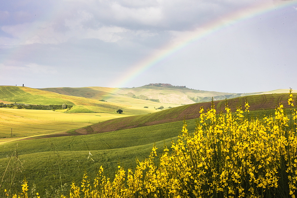 Yellow flowers and rainbow frame the green hills of Crete Senesi (Senese Clays), Province of Siena, Tuscany, Italy, Europe