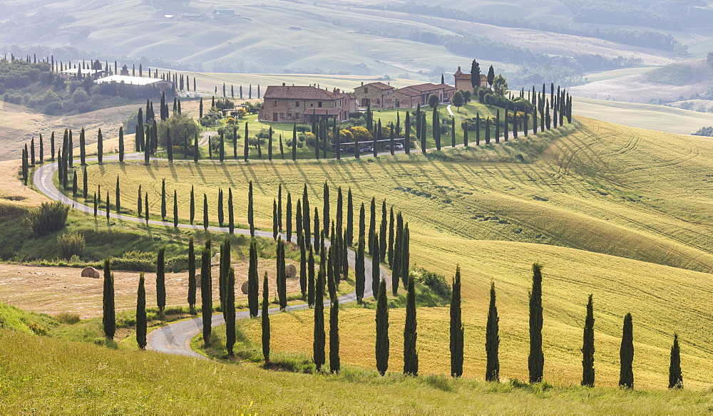 The road curves in the green hills surrounded by cypresses, Crete Senesi (Senese Clays), Province of Siena, Tuscany, Italy, Europe