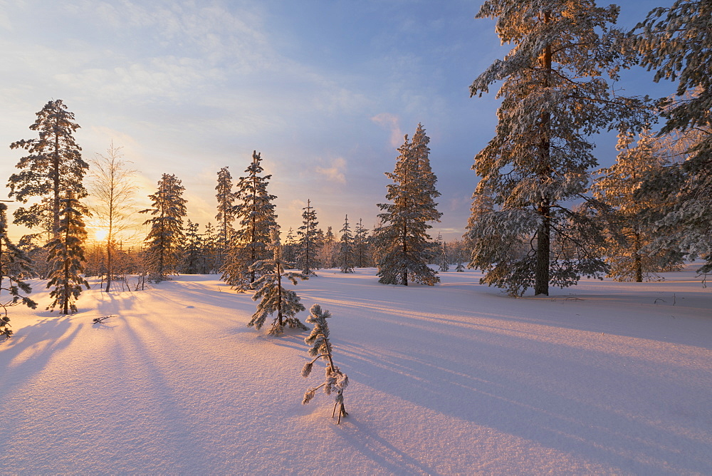 The lights of the arctic sunset illuminate the snowy woods, Vennivaara, Rovaniemi, Lapland region, Finland, Europe
