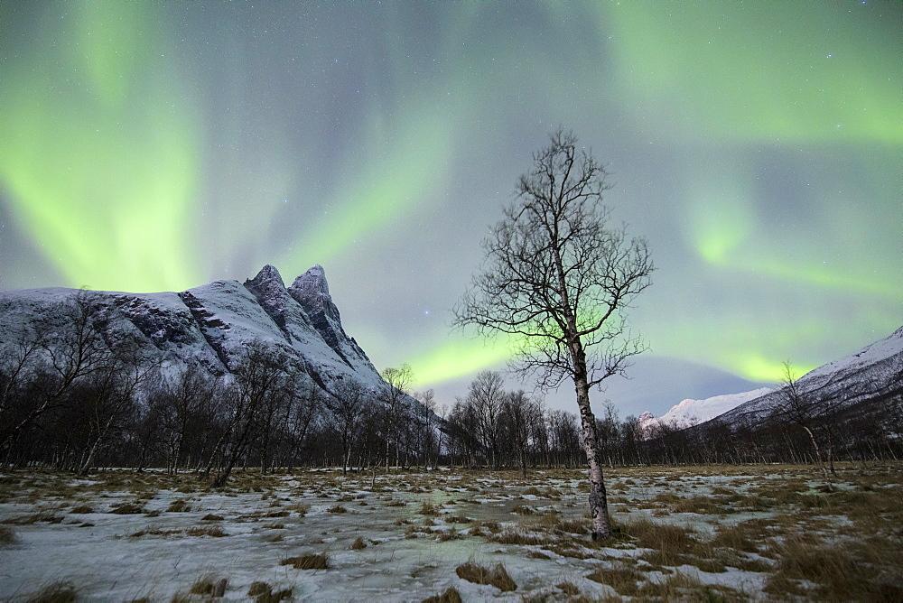 The snowy peak of Otertinden below the Northern Lights (aurora borealis) in the polar night, Oteren, Lyngen Alps, Troms, Norway, Scandinavia, Europe
