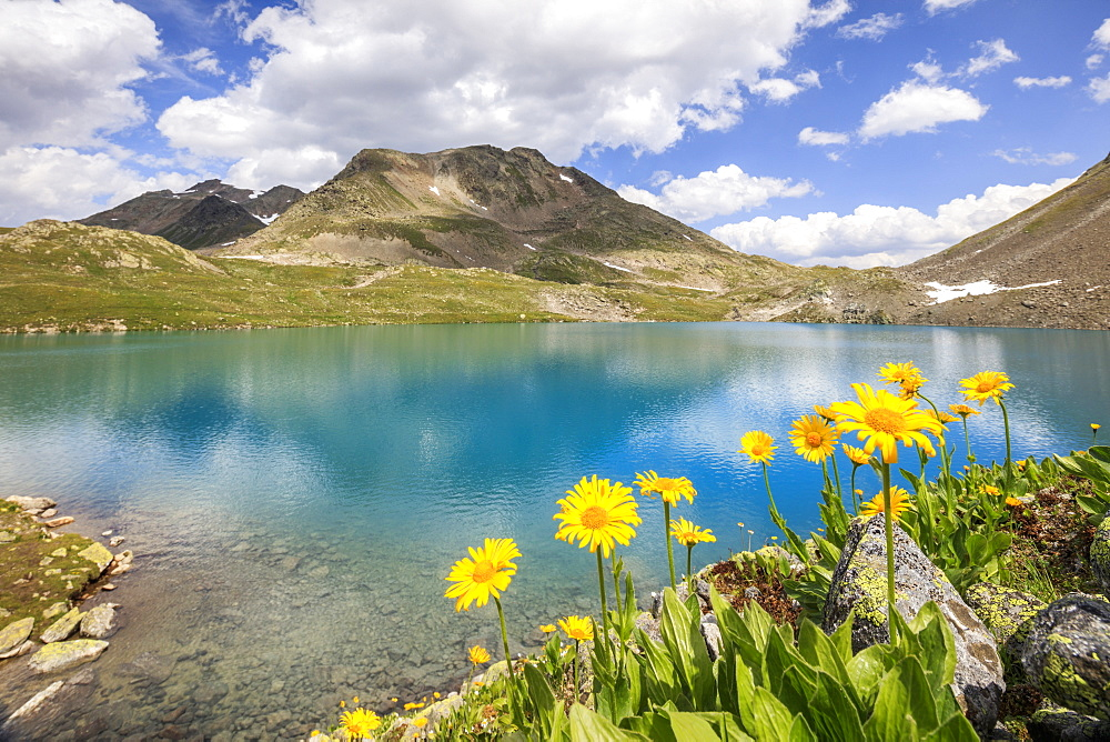 Turquoise lake framed by yellow flowers and rocky peaks, Joriseen, Jorifless Pass, canton of Graubunden, Engadine, Switzerland, Europe