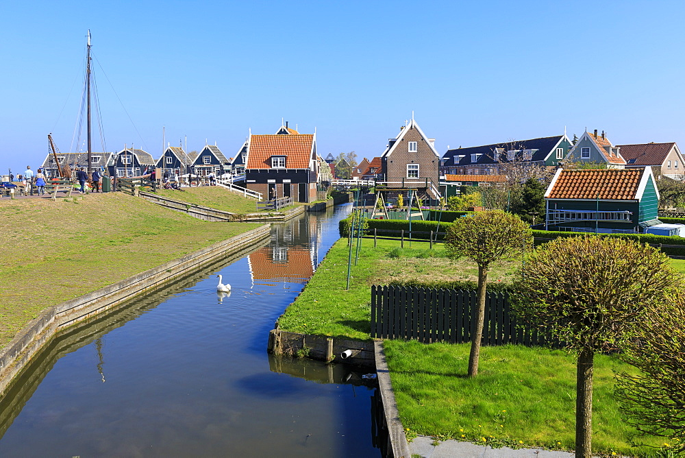 White swan in the canal surrounded by meadows and typical wooden houses, Marken, Waterland, North Holland, The Netherlands, Europe