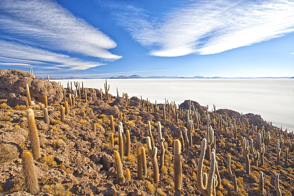 An amazing view from the top of the Isla Incahuasi, Salar de Uyuni, Bolivia, South America
